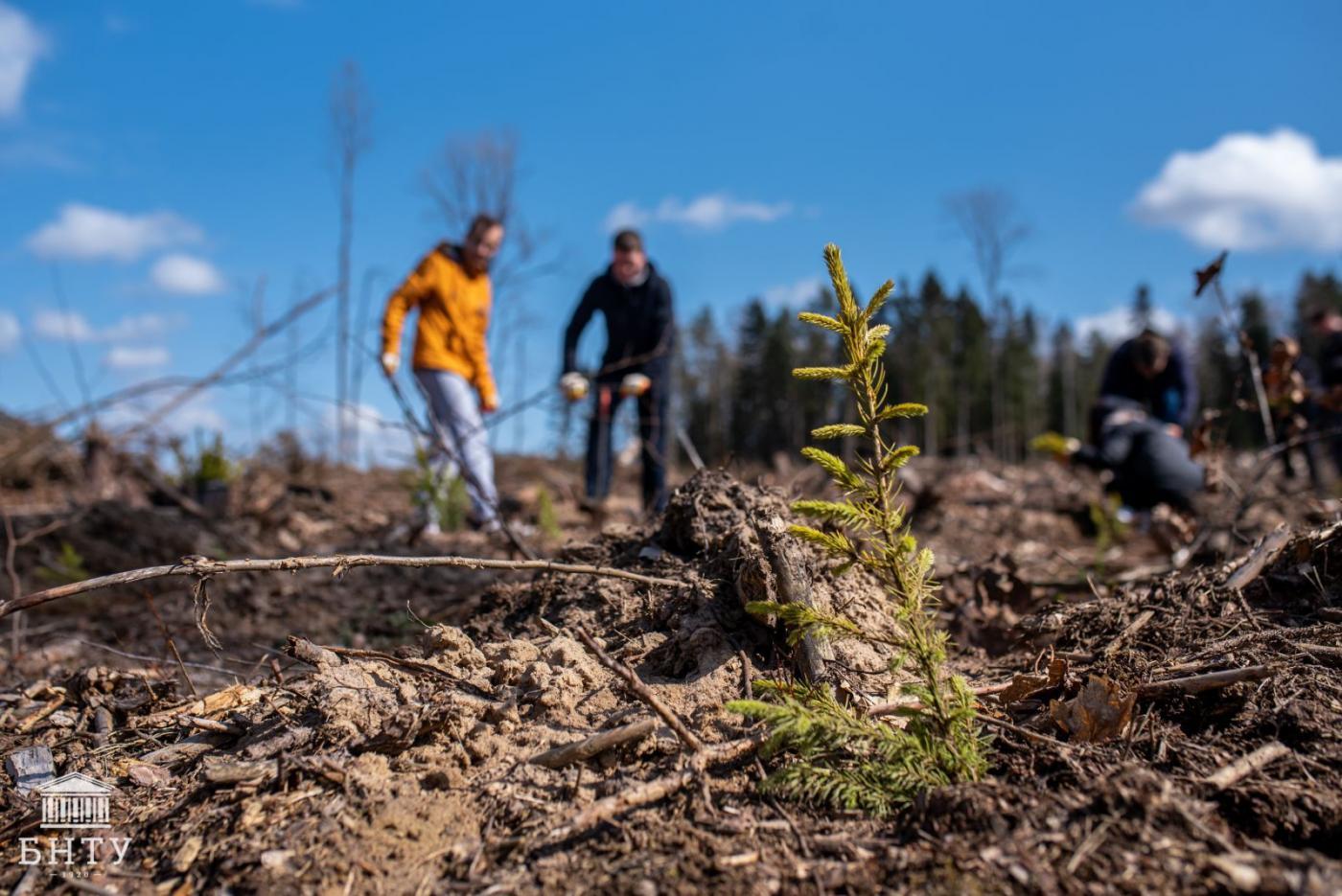 «Важно сохранять природу и баланс», – студенты БНТУ приняли участие в акции «Неделя леса – 2021»